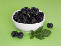 Bowl of wild blackberries - food for free Stock Photography