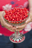 Bowl of wild strawberries Stock Image