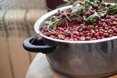Bowl with wild strawberries Royalty Free Stock Photos