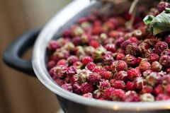 Bowl with wild strawberries Royalty Free Stock Images