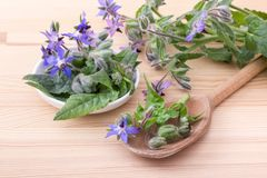 Bowl with starflower. Bowl and wooden spoon with Borage on a wooden background Stock Photography