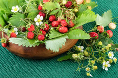 Bowl with woodland strawberries on rustic background. Stock Photography