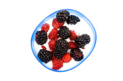 Bowl youhurt with raspberries and blackberries. Over white stock photography