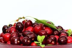 bowla Cherry Royaltyfria Bilder
