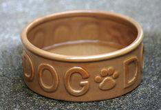 bowla den tomma hunden Royaltyfri Bild