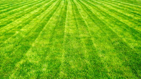Bowling green cut grass lines background. Royalty Free Stock Photo