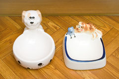 Bowls For Dog And Cat Royalty Free Stock Photos