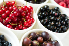 Bowls with fresh ripe gooseberry, red currant, black currant, raspberry, blueberry and cherry Stock Photography