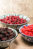 Bowls of raspberries Marionberries and tayberries Stock Photography