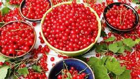Bowls with red currant stock video footage