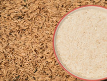 bown зерна риса Стоковая Фотография RF