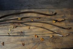 Bows in autumn leaves Stock Photos