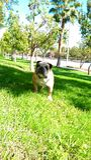Bowtie draußen Stockfoto