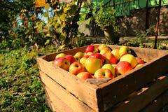 Box of apple stock photos