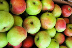 Box of apples. A box of apples at the farmers market Royalty Free Stock Photos