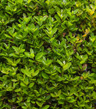 Box background with green leaves Stock Image
