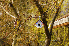 box for birds in nature Royalty Free Stock Photography