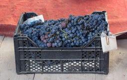 Box of blue grapes Royalty Free Stock Photo