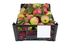 The box of bright apples isolated over white Royalty Free Stock Image