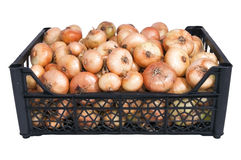 Box of bright fresh yellow onions Stock Images