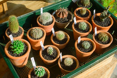 A box of cactuses Stock Images