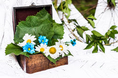 Box with camomiles and leaves. Old brown box decorated with camomiles and fresh leaves in a white tablecloth Royalty Free Stock Images