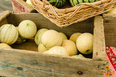 Box of cantalope melons at the market Stock Image