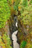 Box Canyon And White Whiter In Mount Rainier NP Stock Images