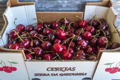 Box of cherries from Serra da Gardunha in Portugal