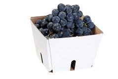 Box of concord grapes Stock Image