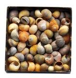 Box full of seashells royalty free stock photo