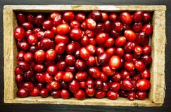 Box of Cranberries Stock Photography