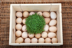Box with Easter eggs Royalty Free Stock Photography