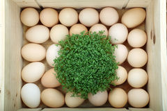 Box with Easter eggs Stock Image