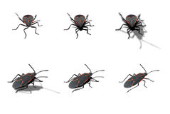 Box elder bug. 2 shots, 3 shadow options including one without shadow stock images