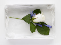 Box Filled With Rose Corsages Stock Image
