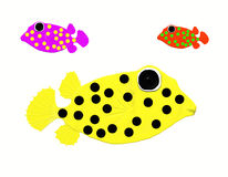 Box fish. Three box fish on white Royalty Free Illustration