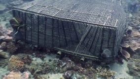 Box for fishing on seafloor underwater in ocean of Philippines. stock footage