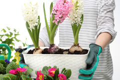 The box with flowers, planting potted plants Stock Image