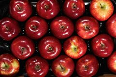 Box of fresh apples Royalty Free Stock Images