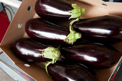 Box fresh aubergines Stock Photos