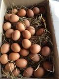 Box of fresh chicken eggs Stock Photos