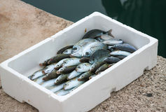 Box with fresh fish Royalty Free Stock Photos