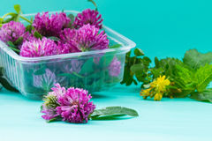 Box with fresh red clover on green bacground. St. John`s wort an stock image