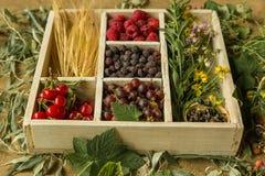 Box of fresh seasonal summer berries Royalty Free Stock Image