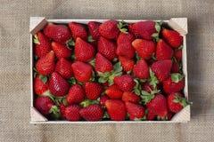 Box of freshly picked seasonal strawberries - image royalty free stock photos