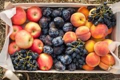 Box with fruit Stock Image