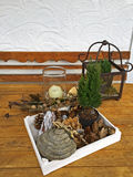Box full of dried pine cone, mushroom, Autumn leaves, barks to d Stock Photography