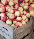 Box full of ripe nectarines Stock Images