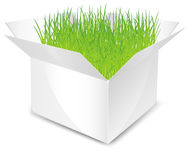 Box with grass Royalty Free Stock Photography